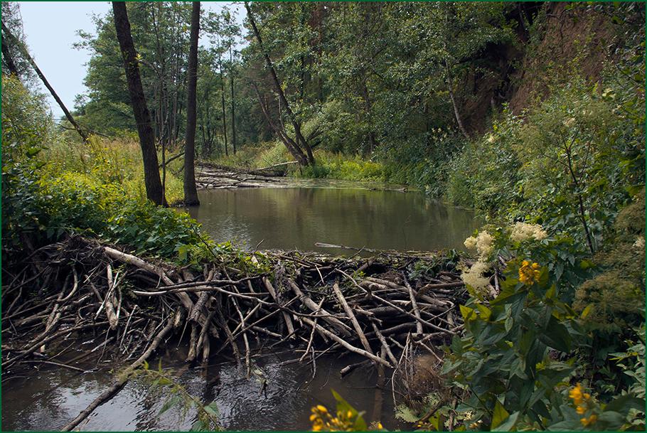 malie-reki-proekt