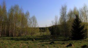 Берёзовые рощицы покрылись неповторимой первомайской зеленью