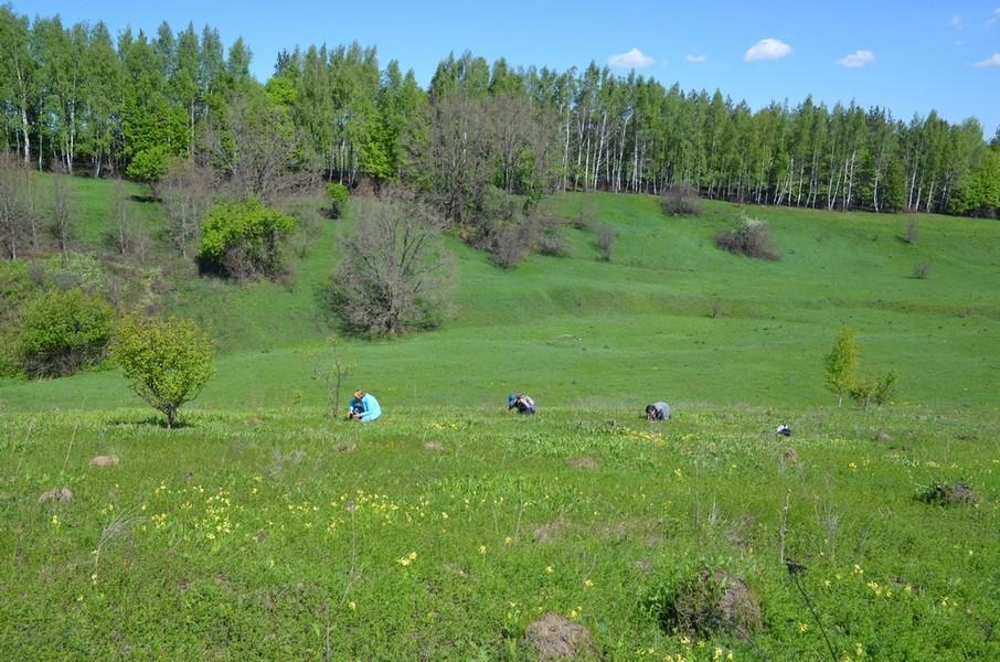 Обследование местообитаний редких видов специалистами ПФ Верховье