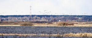 Весенние разливы Виноградовской поймы Москвы-реки
