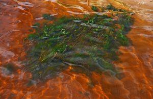 Река Издетель у берега